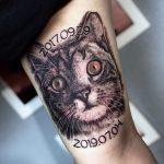 házimacska tetoválás, hausecat tattoo